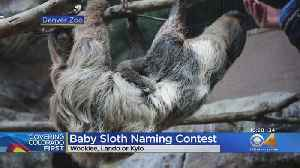Help Denver Zoo Name Its Baby Sloth [Video]
