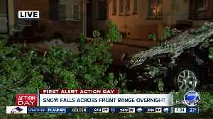 Downed trees around Denver metro area [Video]