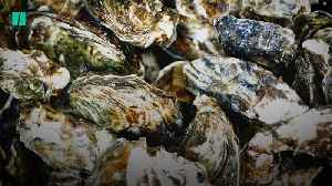 Oysters: The Little Shell That Could [Video]