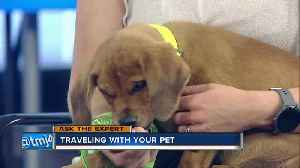 Ask the Expert: Traveling with your pet [Video]