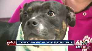 KCK to vote on whether to lift pit bull ban [Video]
