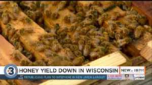 Wisconsin honey production on decline, yield reaches 10-year low [Video]