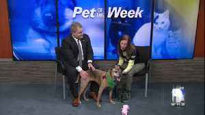 Pet of the Week: Jelly [Video]