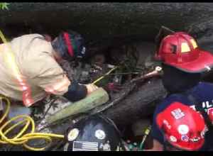Tulsa Firefighters Rescue Man Trapped in Home by Falling Tree [Video]
