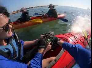 Kayakers save helpless seal pup entangled in netting off Namibia [Video]