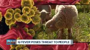 Q Fever? It's a bigger threat to humans than thought [Video]