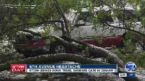 What to do with broken or fallen tree branches after this late May spring storm [Video]