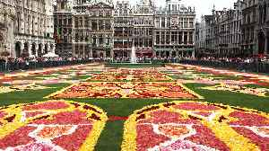 6 of the World's Most Beautiful Flower Carpets [Video]