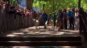 Watch: Rock star's welcome for goats arriving to eat their way through NYC park [Video]