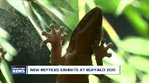 New reptile exhibit opens at Buffalo Zoo [Video]