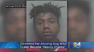 Florida Man Arrested For Abusing Dog Who Later Became 'Deputy Chance' [Video]