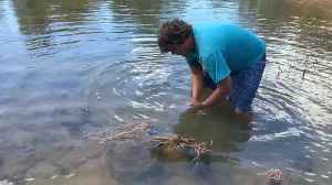 Man Catches Freshwater Crocodile with Bare Hands [Video]
