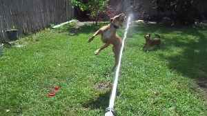 Dogs vs Water Hose [Video]