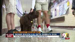 Roger Bacon High School gets therapy dog [Video]