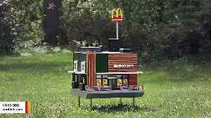 The World's Smallest McDonald's Just Opened - For Bees [Video]