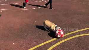 'Lionel Messi of Dogs' runs rings around a group of young football players in Ireland [Video]