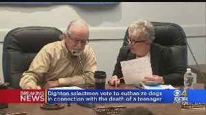 Dighton Selectmen Vote To Euthanize Dogs That Mauled Teen [Video]