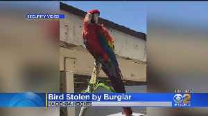 Hacienda Heights Family Heartsick After Their Macaw Is Stolen [Video]