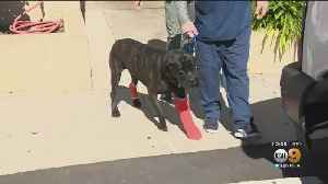 Dogs Recovering After Being Taken On Wild Motor Home Police Pursuit Through San Fernando Valley [Video]