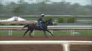 State Board Meets After 25 Recent Horse Deaths at California Track [Video]