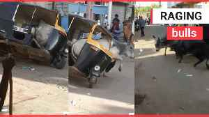 This is the moment a bull got trapped in a tuk-tuk during a fight with its rival on a road in India [Video]