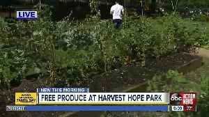 Free produce offered in University Area food desert [Video]
