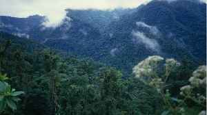 Costa Rica Has Managed To Double Its Forest Cover In The Last 30 Years [Video]