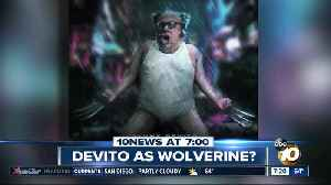 Push to make Danny DeVito the next Wolverine? [Video]