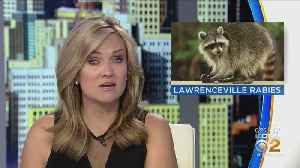 Rabid Raccoon Found In Lawrenceville [Video]