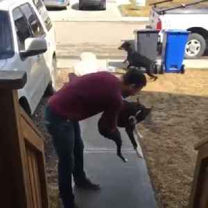 Owner Gets a Warm Welcome From Dog After Week Long Separation [Video]