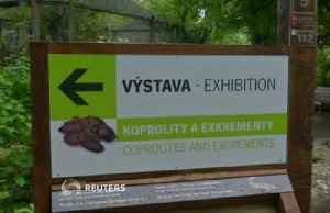 News video: Prague Zoo puts animals' poo on display to educate visitors