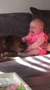 Beautiful Baby and Boxer and Best Buds [Video]