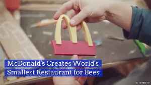 Bees Are Getting Their Own Dollar Menu [Video]