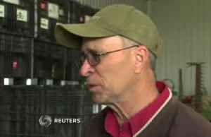Trade frustrations grow for Iowa soybean farmers [Video]