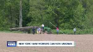 Appellate court: New York farmworkers have right to unionize [Video]