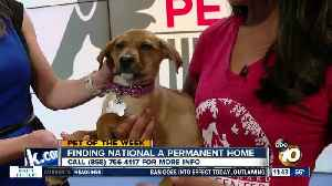 10News Pet of the Week: National [Video]