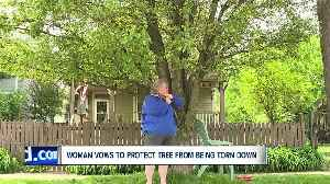 Out on a limb: Woman's defiance buys beloved tree more time [Video]