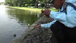 Security Guard Feeds Turtles Their Lunch [Video]