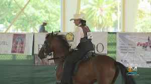 Top Paso Fino Horses Show Off Skills In Miami This Weekend [Video]