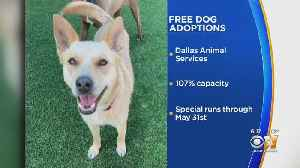 Free Dog Adoptions In Dallas This Memorial Day Weekend [Video]