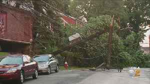 Storm Causes Tree To Fall, Take Down Power Lines In Brighton Heights [Video]
