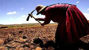 Bolivia's superfood crop seen as means for food security [Video]