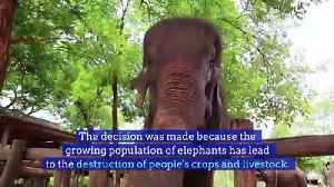 Elephant Hunting Ban Lifted in Botswana [Video]