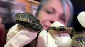 Anaconda Gives 'Virgin Birth' At New England Aquarium [Video]