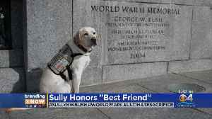 Trending: Sully Honors 'Best Friend' [Video]