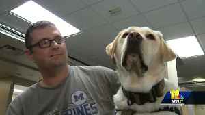 Facility dogs help service members during rehabilitation at Walter Reed [Video]