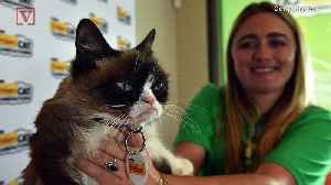 Grumpy Cat Dies, Family Says Her Spirit Will 'Live on Through Her Fans' [Video]