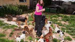 Barking Mad Woman Adopts 22 Rescue Dogs To Live At Her Home – And She Spends £400 On Food Per Month Alone [Video]