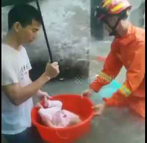 Firefighters rescue residents trapped by floods in China's Guangdong [Video]