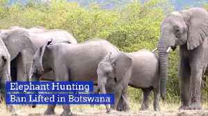 The Elephants In Botswana Are Now In Danger [Video]